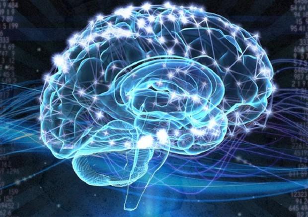 cervello new